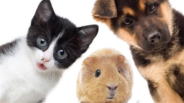 Il y a 7,6 millions de chiens et 4,9 millions de chats recensés comme des animaux de compagnie au Canada.