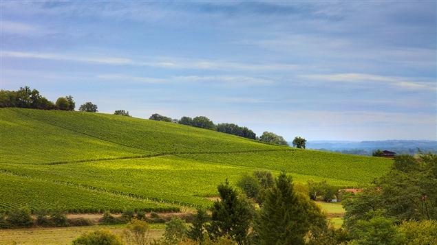 Vue du vignoble d'Alain Brumont à Madiran, dans le sud-ouest de la France