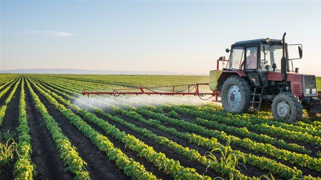 L'application Étiquettes de pesticides permet à tous les utilisateurs d'accéder à de précieuses informations concernant l'utilisation sécuritaire des pesticides, que ce soit pour l'entretien de la pelouse à la maison, pour le jardin ou pour l'exploitation industrielle.