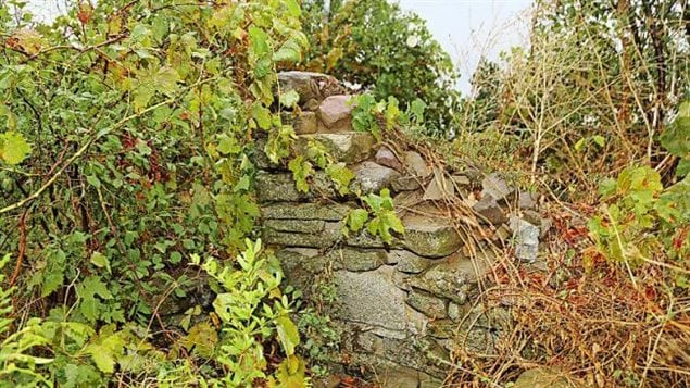 Remains of blockhouse that was a strong point in the Newfoundland Regiment firing line on the far right. The house is nearly hidden by vegetation even though it is only several metres from a farmer's road that runs nearby.