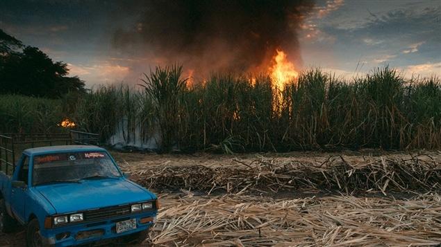 Une scène du documentaire <i>Tout peut changer</i>, d'Avi Lewis d'après le livre de Naomi Klein