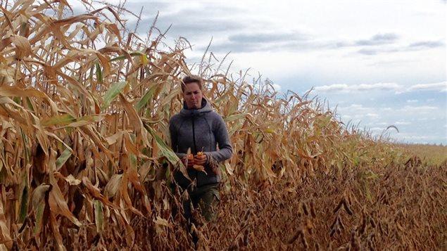 Entre un champs de maïs et un champs de soya au Québec.