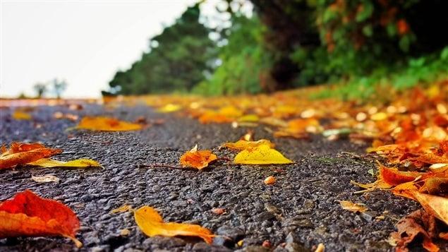 Piste cyclable automne