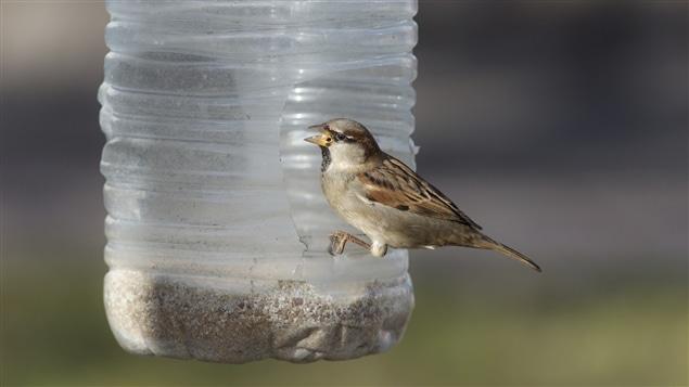 Un oiseau dans une mangeoire