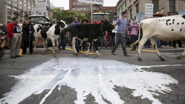 Dairy farmers are seen in early October 2015 at one of a number of protests against the Trans-Pacific Partnership trade agreement that was held in Ottawa.