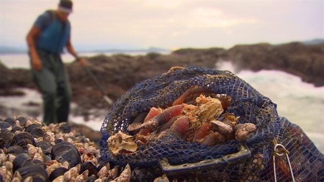Les mollusques et les crustacés sur la côte Atlantique n'échappent pas à la menace du réchauffement climatique et à l'empoisonnement par les algues toxiques.