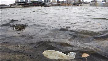 Le déversement d'eaux usées à Montréal donne lieu à des scènes insolites, telle la vision de ce condom qui flotte dans le fleuve.