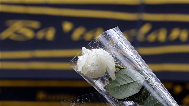 Une rose placée devant le Bataclan à Paris, en souvenir des victimes des attentats.