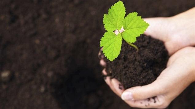 Une plante verte dans la terre