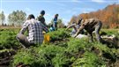 Une expérience de travail saisonnier sur une ferme