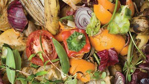 Des aliments dans une poubelle.