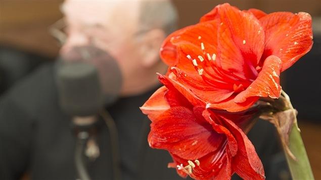 Une amaryllis tr�ne devant notre chroniqueur, Pierre Gingras