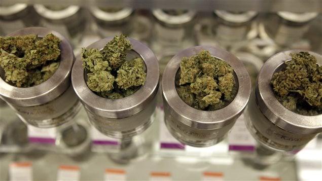 De la marijuana dans un comptoir de vente