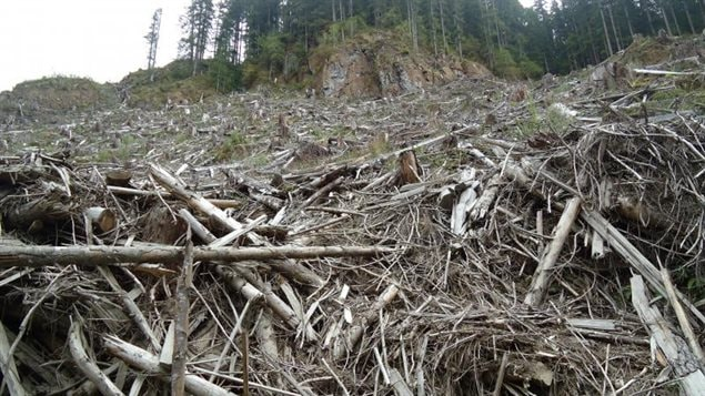 Clearcut area in Walbran Valley