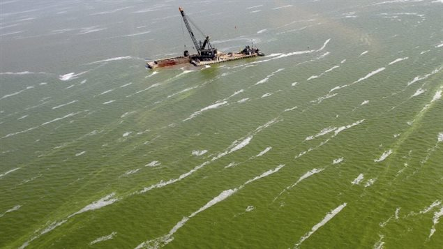 Massive algea blooms in the Great Lakes are caused by a number of factors, including warmer water temperatures. n this Aug. 21, 2013 photo, a dredge barge works along the edge of a large algae bloom in the Toledo shipping channel in Toledo, Ohio. Toxins from the algae blooms on western Lake Erie are infiltrating water treatment plants along the shoreline, forcing cities to spend a lot more money to make sure their drinking water is safe