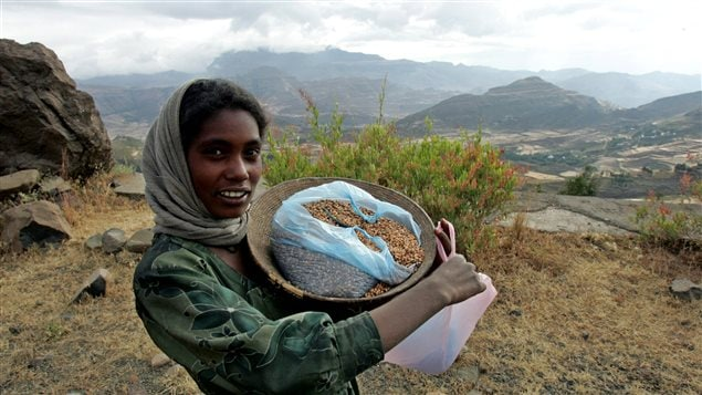 An Ethiopian girl sells barley seeds in the mountainous region of northern Tigray province November 23, 2004. Ethiopia struggles to feed its fast-growing population of 70 million, 85 percent of whom are peasants, amid recurrent drought and deep poverty.