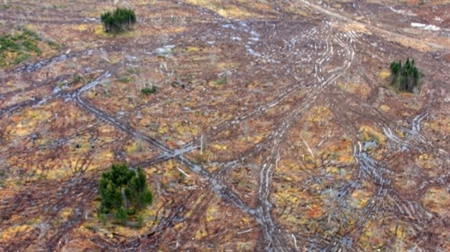 Forest clumps left during clearcutting for biomass, in compliance with Nova Scotia's  Wildlife Habitat and Watercourse Protection Regulation