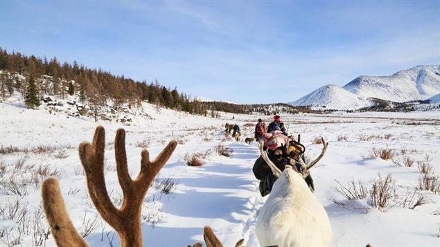 Troupeau de rennes dans la taïga mongole