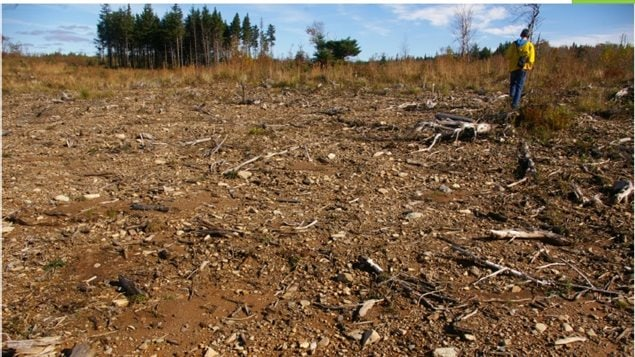 Topsoil erosion three years after the biomass harvesting by Northern Pulp Nova Scotia Corporation