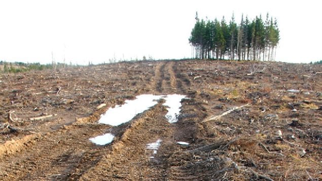 A new study questions the *carbon neutral* claims of forest cutting to fuel a biomass power generato