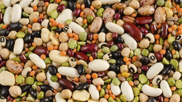 Lentilles, pois chiches, haricots blancs, noirs et rouge.