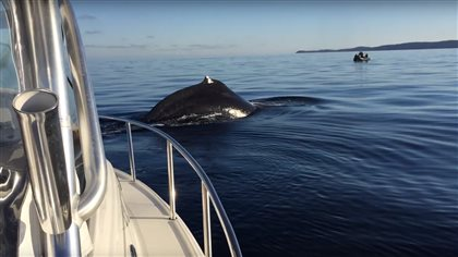 The two whales lingered around Kyle Noble's eight-metre boat for several minutes.