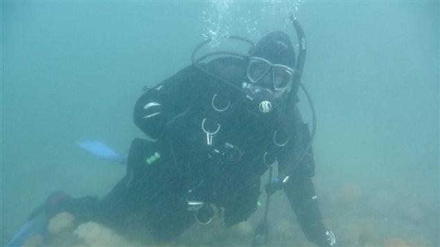 Plongée sous le pont de Gaspé