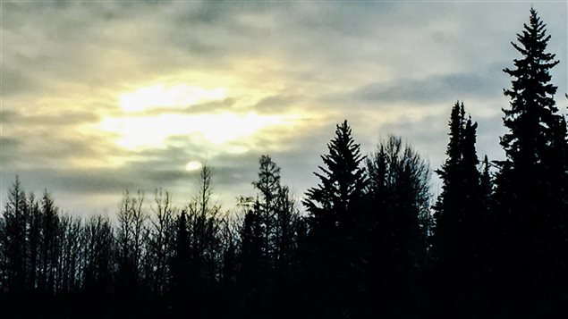 Cimes d'arbre de la forêt boréale