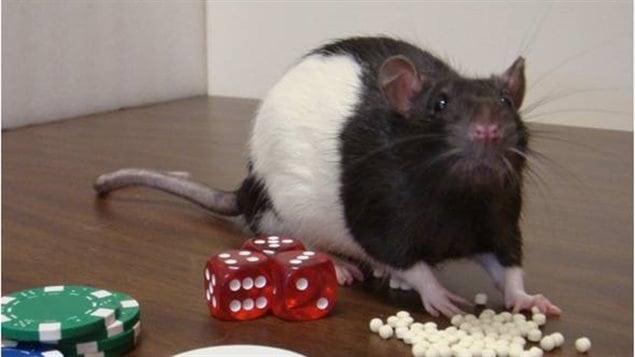rat_joueur