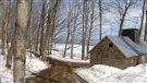 Les érables du Nord