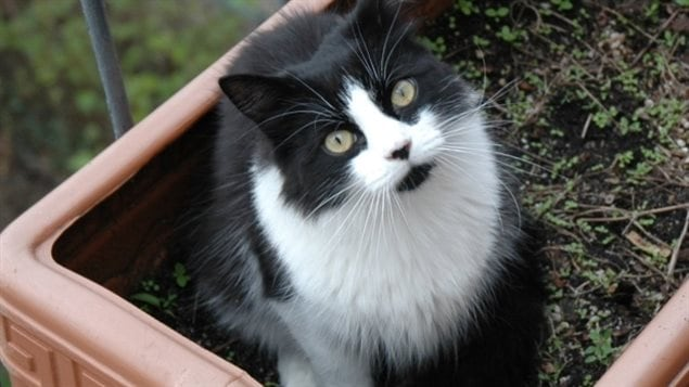 A Canadian man is going to jail over a cat, that's not his, and not at his permanent address all because he wouldn't pay a $30 cat licence for a stray cat.