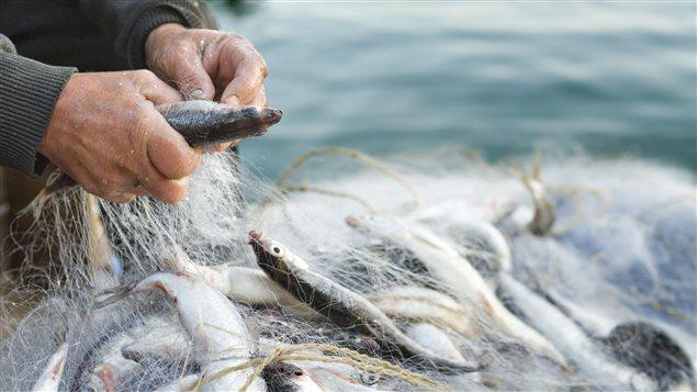 Le réchauffement climatique frappe aussi négativement la pêche en eau douce avec la baisse du niveau de l'eau, notamment dans les Grands Lacs.