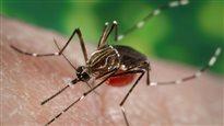 Des réponses sur le Zika d'ici deux mois