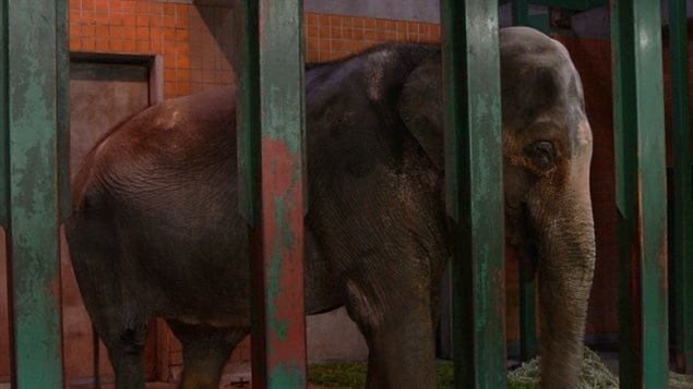 """A petition says after decades in the Jananese zoo, Hanako should be moved to a sanctuary to have the company of other elephants and to end her """"solitary confinement in a concrete prison"""""""