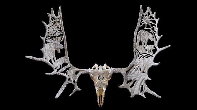 Yukon Seasons: Moose antlers and skull, 44x47x24in, 2000-2003