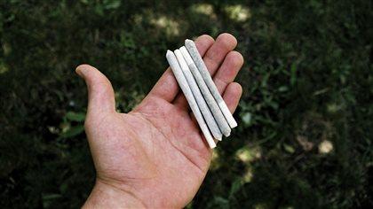 D mant lement d 39 une plantation de cannabis dans une for Plantation interieur cannabis