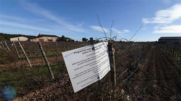 Sur une propriété de l'Institut national de la recherche agronomique (INRA), à Gruissan dans l'Aude
