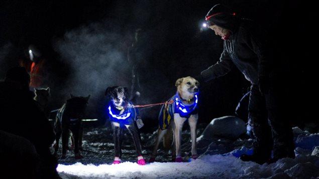 狗拉雪橇长途越野赛狗是成功的关键之一