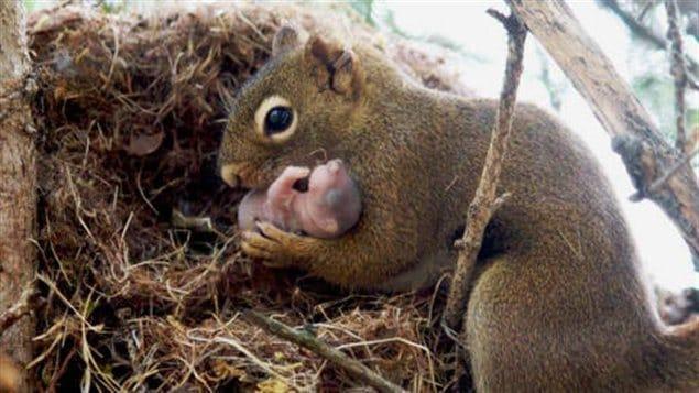 Un écureuil et son bébé
