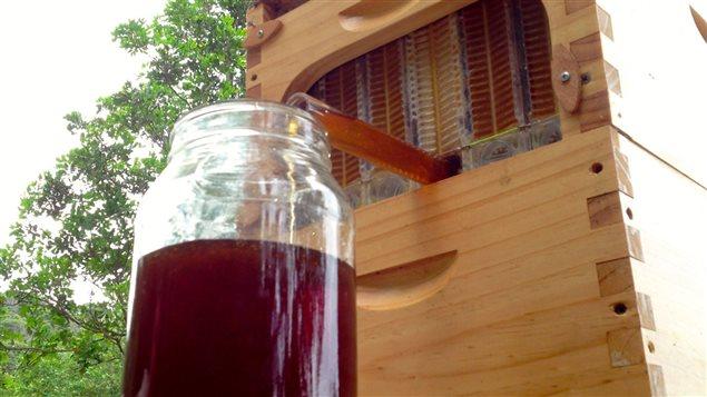 Voici � quoi ressemble la nouvelle g�n�ration de ruche.