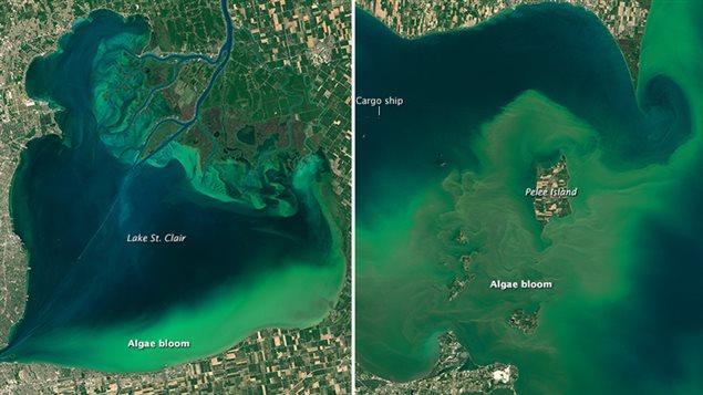 Prolifération des algues dans le lac Érié