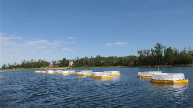 Fifteen mesocosms installed in Nakamun Lake, Alberta. Like giant testtubes, the columns extend from the surface into the lake bottom several metres below.