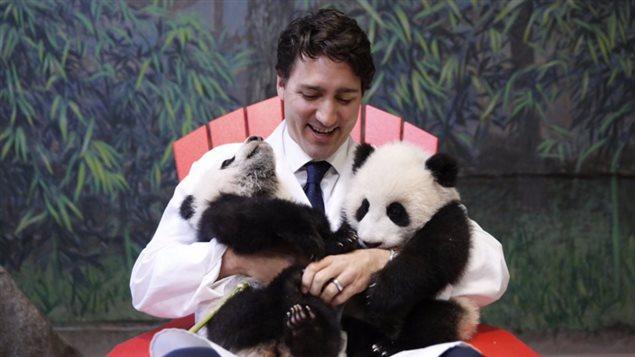 Justin Trudeau serre les bébés pandas dans ses bras au Zoo de Toronto.