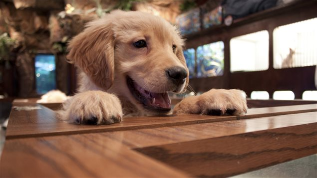 Un chien dans une animalerie.