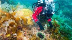 Archéologie subaquatique