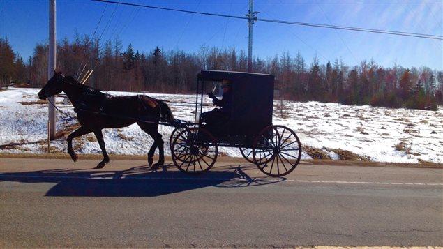 Un cheval tire un chariot