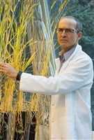 Faouzi Bekkaoui (PhD)shown inspecting research wheat varieties in the greenhouse, is the executive director of the wheat programme at Canada's National Research Council (NRC) which is an integral part of the CWA.
