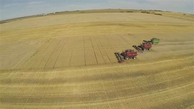 Combines harvesting wheat in Alberta. Wheat is an 11 billion dollar sector of the Canadian economy, with much of the harvest being exported.