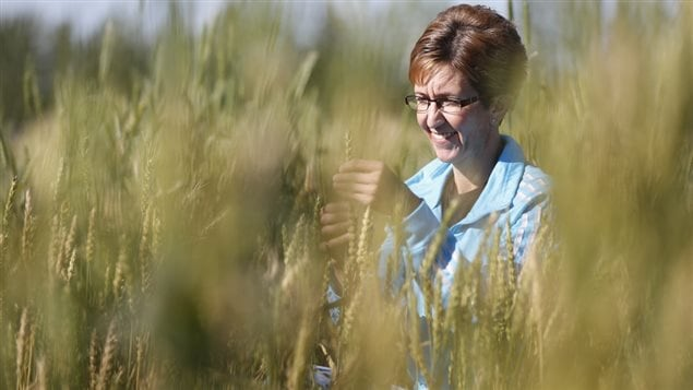 Another of the scientists working in the five year $97 million research and development project, Lanette Ehman in a wheat field