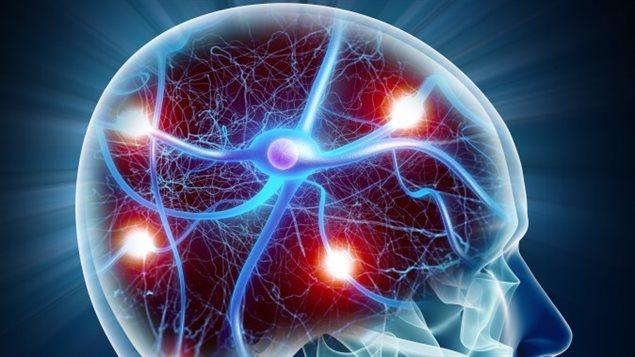 Neurones du cerveau